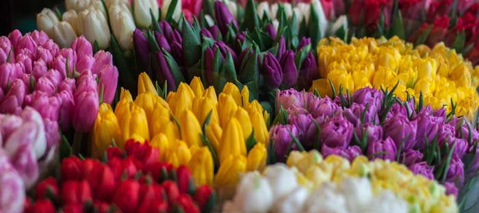 Spring is a wonderful time to enjoy shopping, dining, and the wonderful sights in Yardley, Bucks County PA